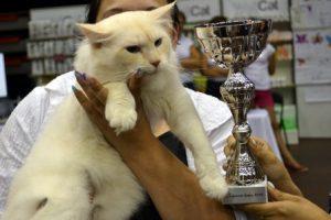 Jelgavas kaķis 2014